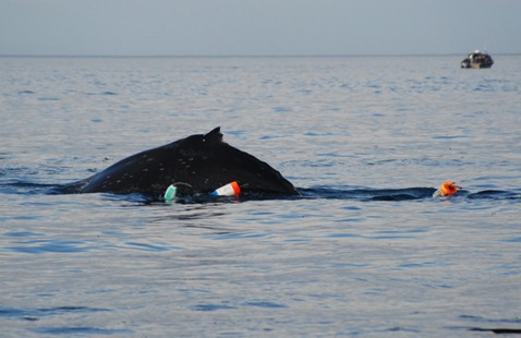 Searching for an entangled humpback