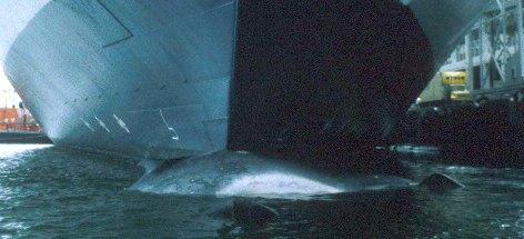 Ship strikes threaten fin whales