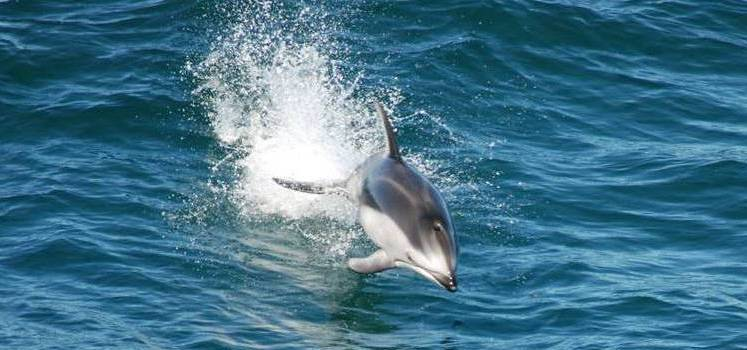 The Dolphin Diet