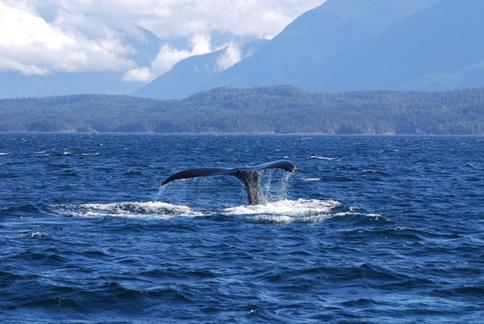 Protecting marine mammals this summer