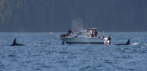 Boat exhaust impacts killer whales
