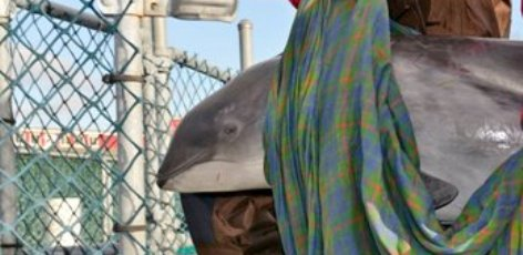 A Word on Harbour Porpoise