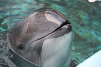 What's Happening With Harbour Porpoise?