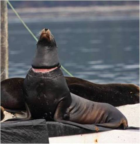 What to do when a marine mammal is in trouble?