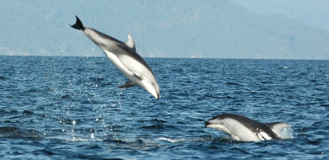 Real-time report reveals dolphins
