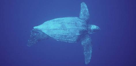 Is it too late for leatherbacks?