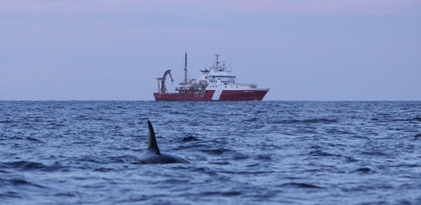 Life onboard a cetacean research vessel (Part 2)
