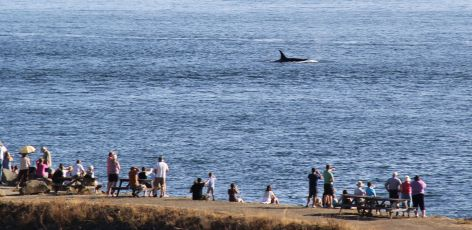 Watching Whales From Shore