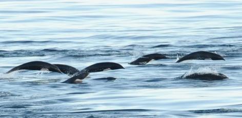 Offshore Survey Adventures: Part I