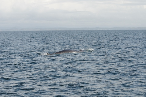 Finding the Fin Whales