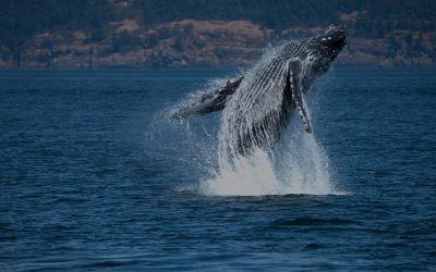 How to Choose an Ethical Whale Watching Company