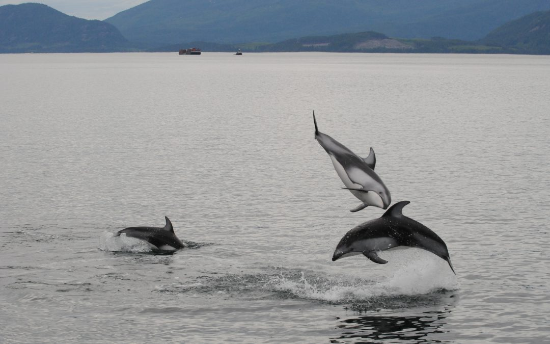Tails from the Crypt: Cryptic Colouration Helps Disguise Cetaceans from their Prey