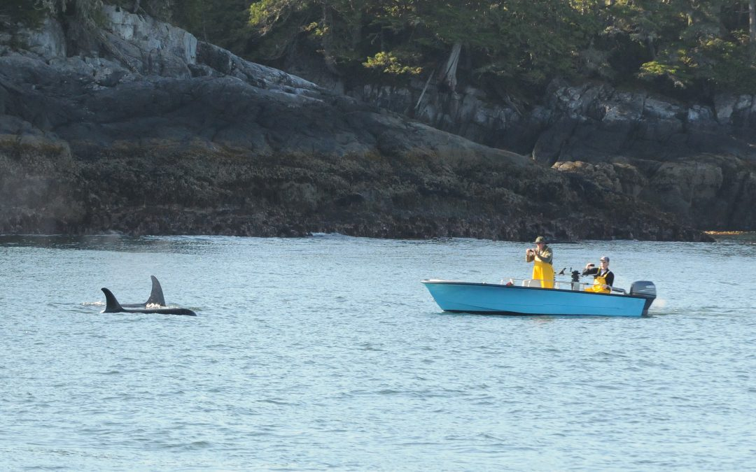 New Regulations Announced by the Federal Government Will Help Protect Resident Killer Whales