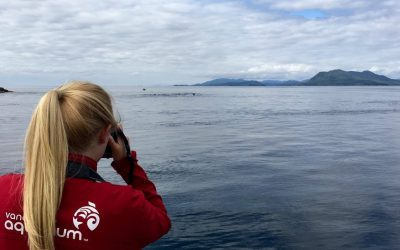 A Summer of North Coast Cetaceans