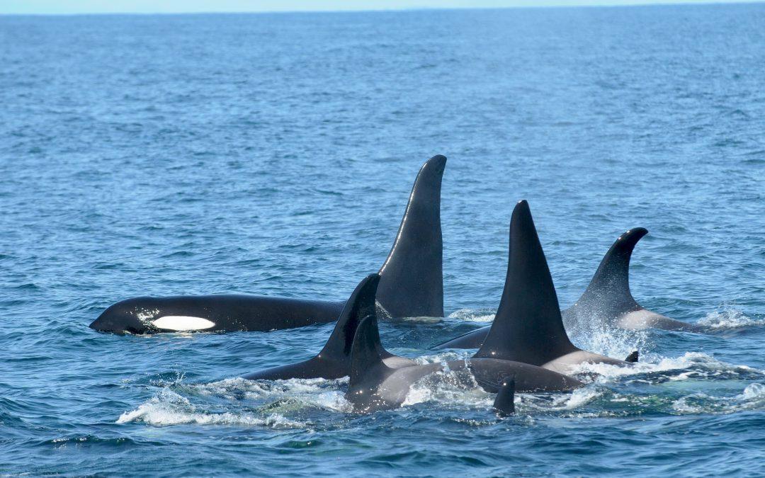 Whales Need Beach Days Too!