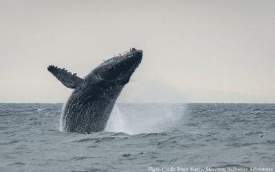 Silence of the Humpbacks
