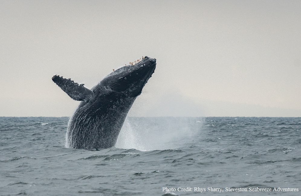Silence of the Humpbacks
