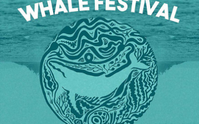 The 2nd Annual North Coast Whale Festival is Happening this Weekend!