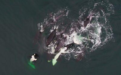 A Whale of a Season – Part 2