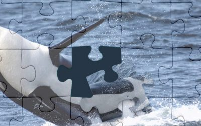 DNA: A KEY PIECE IN THE PUZZLE OF KILLER WHALE CONSERVATION