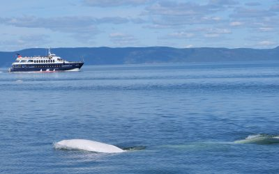 Life isn't smooth sailing for a whale – it's our job to make it a little easier: A look back on our efforts from 2019