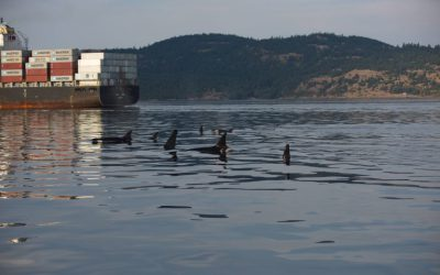 A Stressful Environment: Examining Stress in Resident Killer Whales