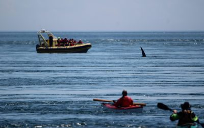 Keep your distance, even after COVID: New study identifies how well boaters in the Salish Sea follow regulations around whales