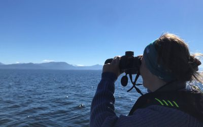 The WhaleReport Web App: Introducing a New Way to Report Whale Sightings!